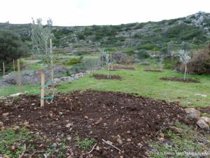 5.Olive-orchard_sm
