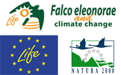 Ο Μαυροπετρίτης, Falco eleonorae & climate change